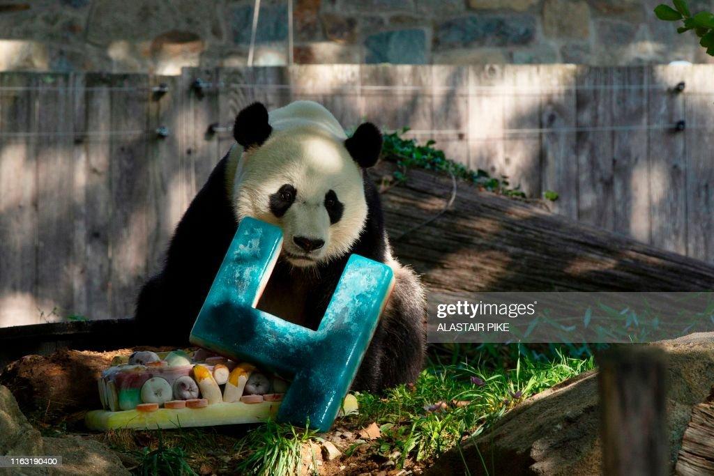 US-CHINA-ANIMAL-PANDA : News Photo