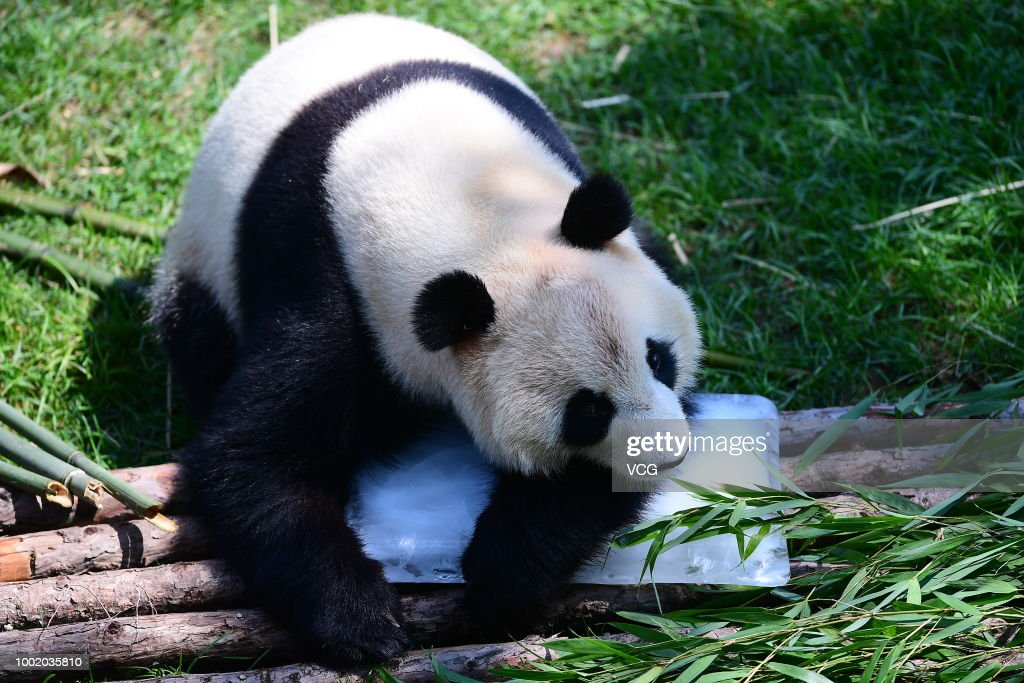 Animals Beat Summer Heat With Frozen Treats In Shenyang