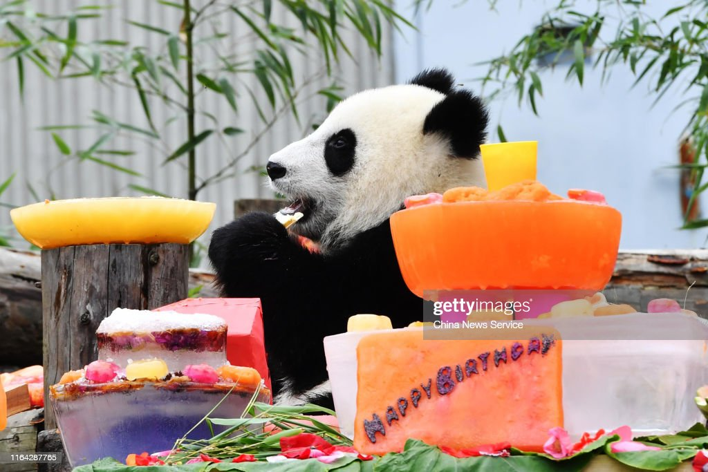 Amazing A Giant Panda Cub Born In 2018 Eats Birthday Cake During A Funny Birthday Cards Online Aboleapandamsfinfo
