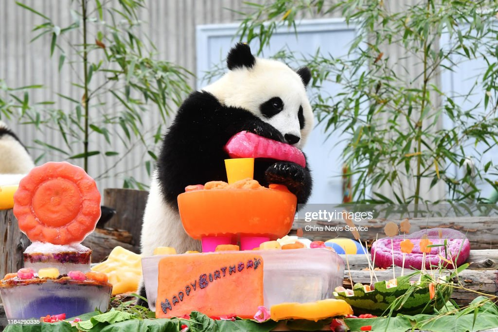 Cool A Giant Panda Cub Born In 2018 Eats Birthday Cake During A Personalised Birthday Cards Cominlily Jamesorg
