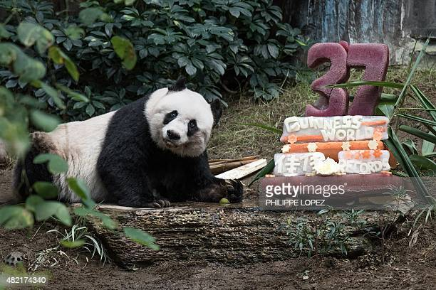 Giant panda Jia Jia is seen next to her cake made of ice and fruit juice to mark her 37th birthday at an amusement park in Hong Kong on July 28 2015...