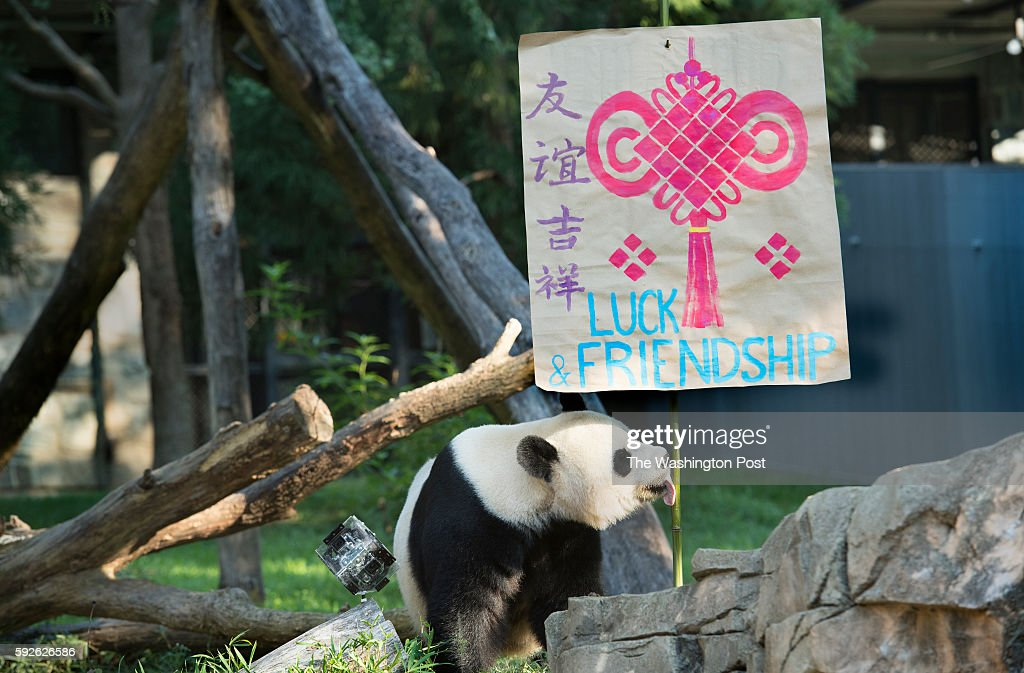 Giant Panda Mei Xiang Chooses A Symbol Of Luck Friendship For Her