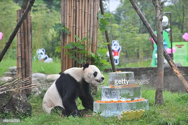 Giant panda Pan Pan sits near a frozen cake during its 30th birthday celebration at the China Conservation and Research Center for the Giant Panda on...