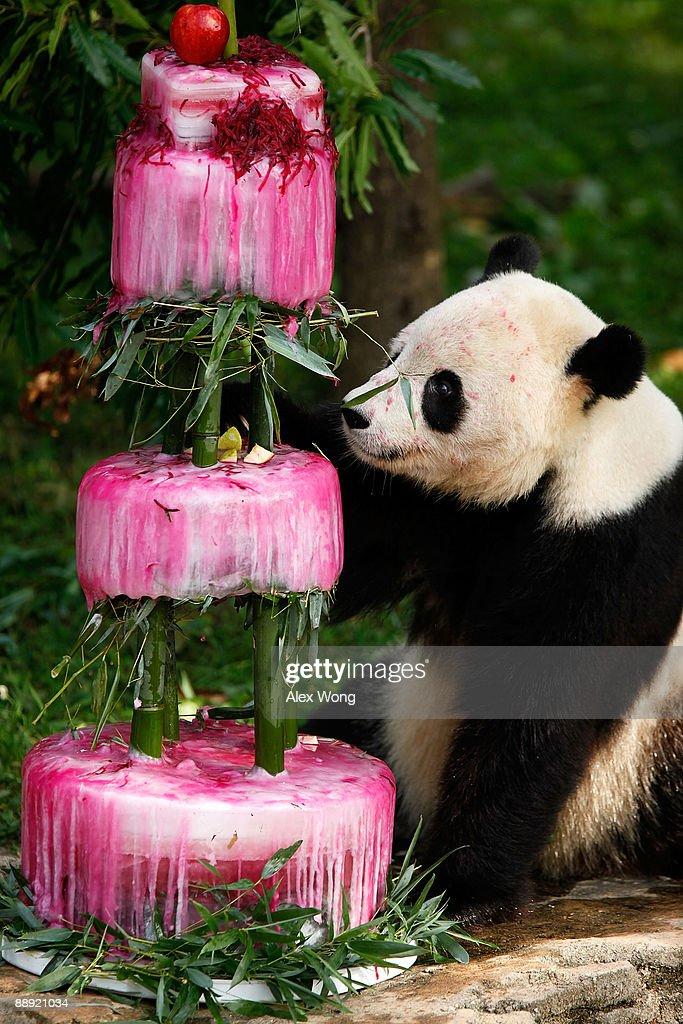 Photos Et Images De Smithsonian National Zoo Celebrates The 4th