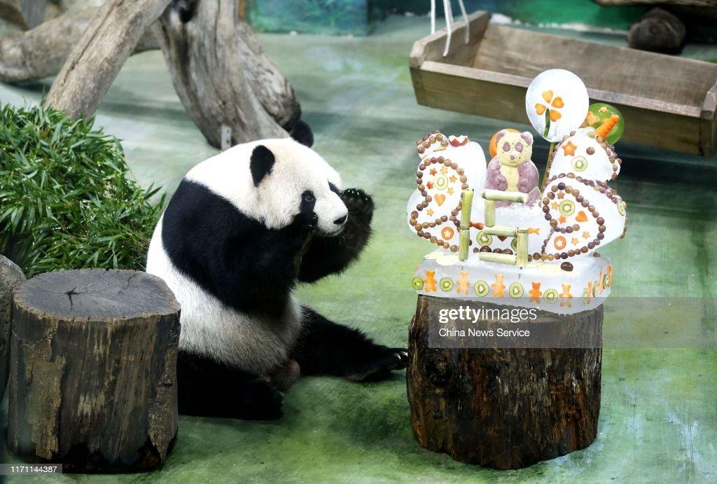 Miraculous Giant Panda Tuan Tuan Looks At Its Birthday Cake At Taipei Zoo On Funny Birthday Cards Online Sheoxdamsfinfo