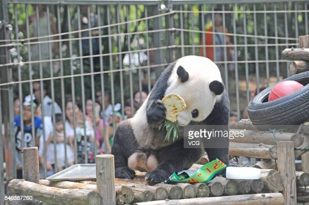 Giant panda Wei Wei eats birthday cake during its 12th birthday at Wuhan Zoo on August 29 2017 in Wuhan Hubei Province of China A lot of visitors...