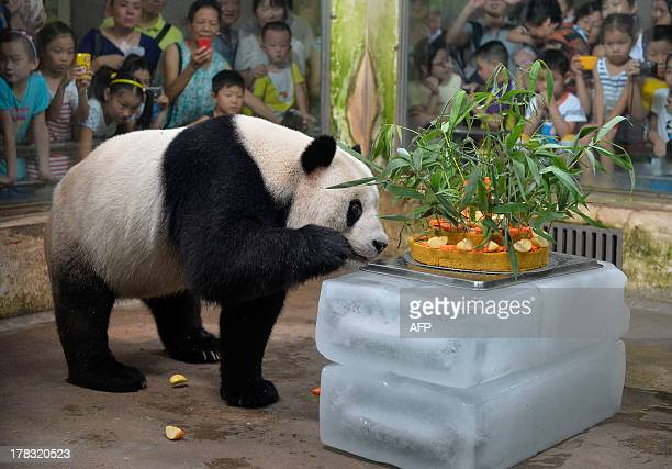 Giant panda Wei Wei smells a birthday cake made of fruits and bamboo in its enclosure in Wuhan zoo central China's Hubei province on August 29 its 8...