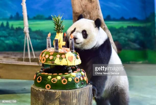 Giant panda Yuanzai enjoys her birthday cake at Taipei Zoo on July 6 2017 in Taipei Taiwan of China Taipei Zoo celebrates birthday for Yuanzai who...