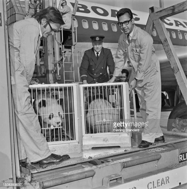 Giant pandas Chia Chia and Ching Ching, a gift from Chinese leader Mao Zedong to Conservative leader Edward Heath, arrive in the UK from Beijing in...