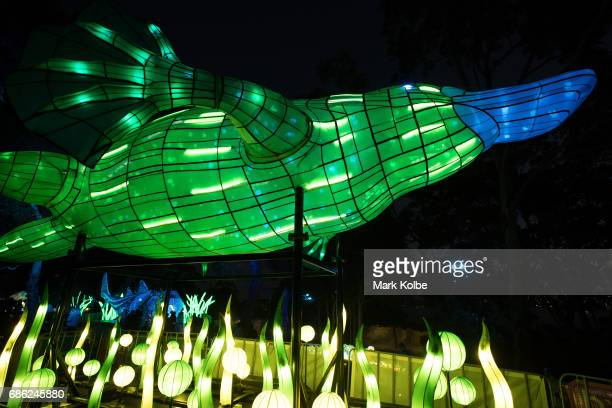 A giant platypus installation one of the giant illuminated animal sculptures on display at Taronga Zoo is seen during a media call ahead of Vivid...