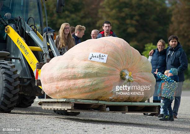 A giant pumpkin is transported to the weightoff at the Giant Pumpkin European Championship in Ludwigsburg southwestern Germany on October 9 2016 /...