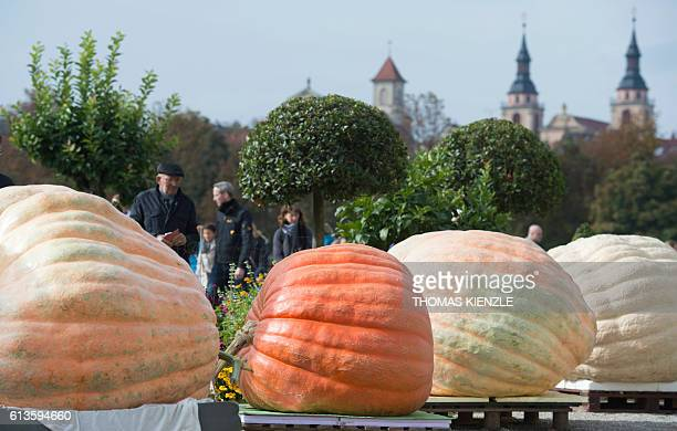 Giant pumpkins are lined up at the Giant Pumpkin European Championship in Ludwigsburg southwestern Germany on October 9 2016 / AFP / THOMAS KIENZLE