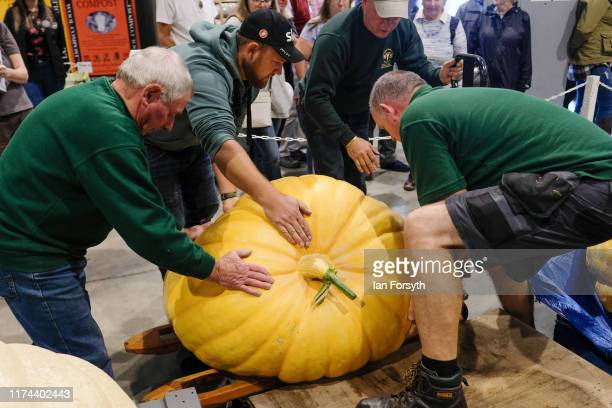 Giant pumpkins are weighed during judging for the giant vegetable competition at the Harrogate Autumn Flower Show on September 13 2019 in Harrogate...