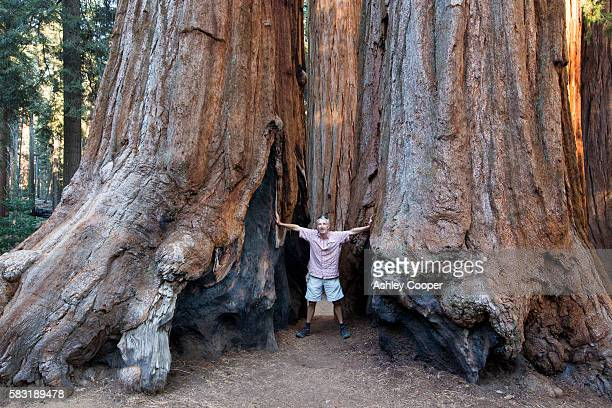 Giant Redwood, or Sequoia, Sequoiadendron giganteum, and an RV in Sequoia National Park, California, USA.
