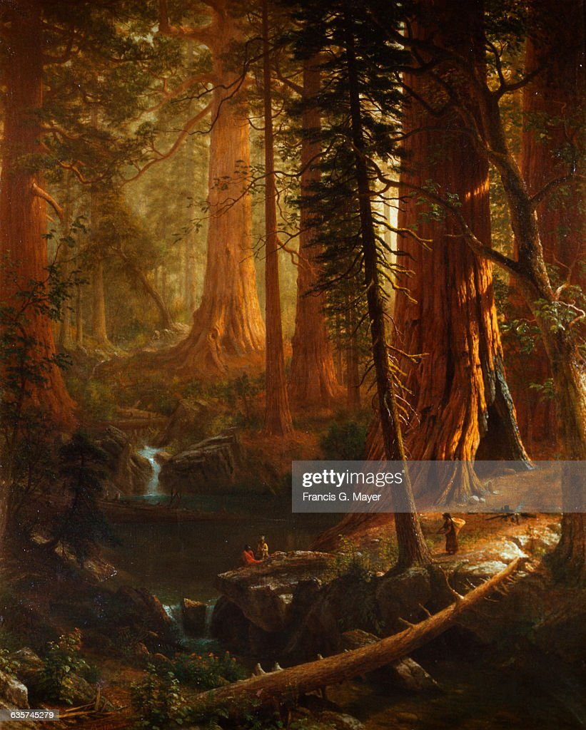 giant redwood trees of california by albert bierstadt ニュース写真