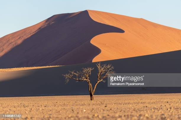 giant sand dune and dead camelthorn trees and red dunes in deadvlei, sossusvlei, namib-naukluft national park, namibia - namib naukluft national park stock pictures, royalty-free photos & images