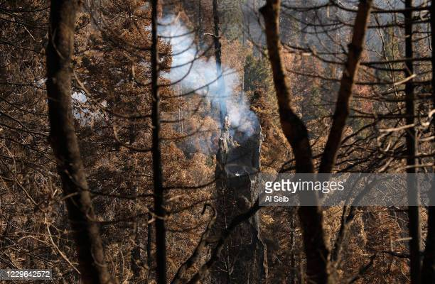 Giant Sequoia tree decapitated by fire still smolders in the fire-ravaged mountainside of the McIntyre Grove, one of the monument areas hardest hit...