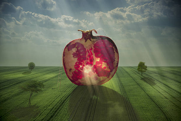 giant slice of pomegranate in field - pomegranate tree stock photos and pictures
