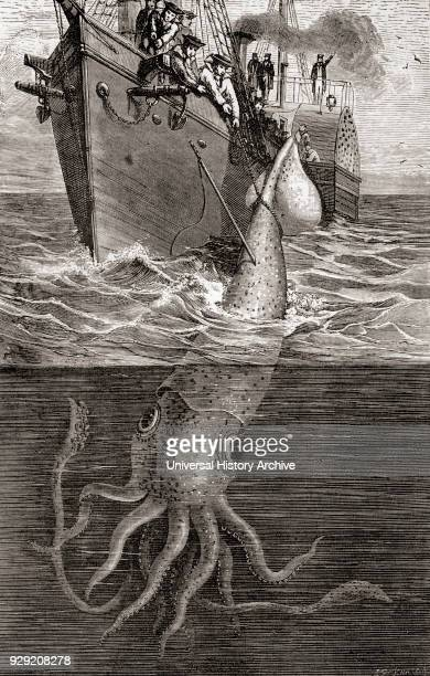 A giant squid Architeuthis Architeuthidae hooked by the French gunboat Alecton in 1861