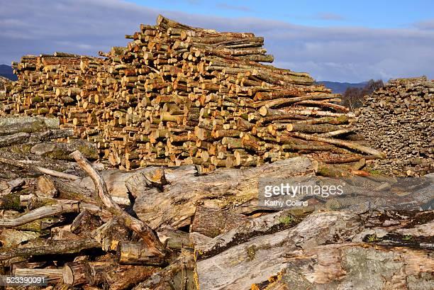 giant stock piles of timber for logging.scotland - アバフェルディ ストックフォトと画像