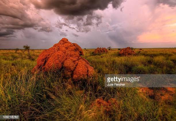 Giant termite Mounds Fitzroy Crossing WA