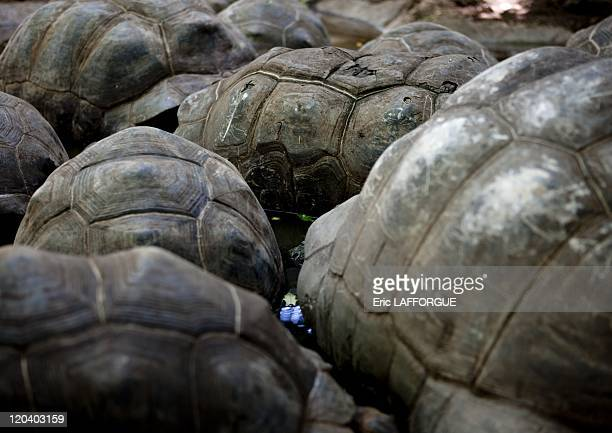 Giant tortoises prison island in Zanzibar Tanzania on February 11 2009 Special restriction Image not available in Bulgaria Ukraine Kazakhstan and...