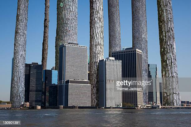 Giant Trees growing out of city