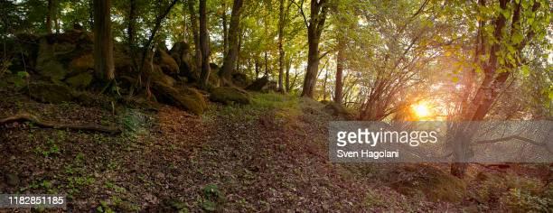 giant's grave (huenengrab) in hessen, germany - tumba necrópolis fotografías e imágenes de stock