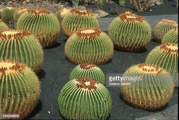 giardino dei cactus - forme stock photos and pictures