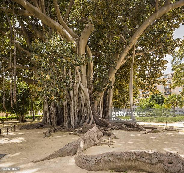 Giardino (garden) Garibaldi