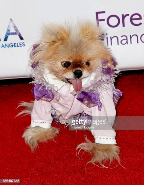 Giggy attends the Gay Men's Chorus of Los Angeles 6th annual Voice Awards at JW Marriott Los Angeles at LA LIVE on May 20 2017 in Los Angeles...