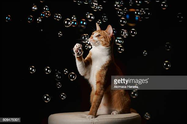 Ginger cat and bubbles