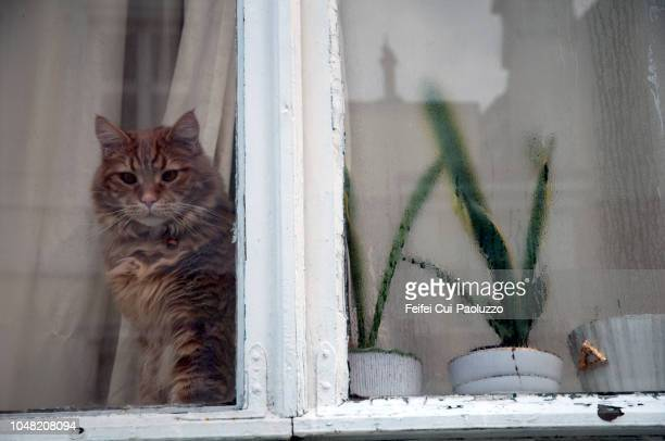 A ginger cat behind a window at Bergen, Western Norway