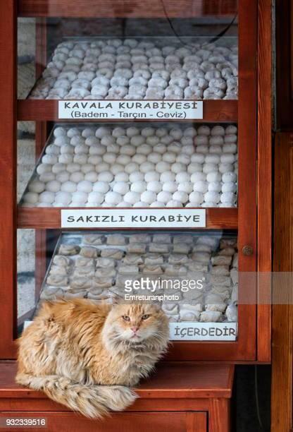 ginger cat guarding cookies at a store window. - emreturanphoto stockfoto's en -beelden
