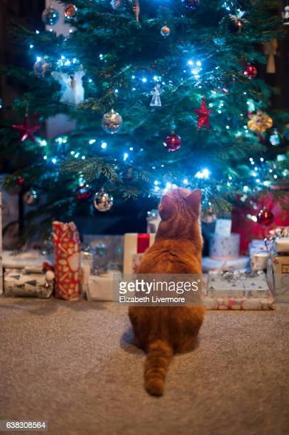 Ginger cat investigating presents under Christmas tree