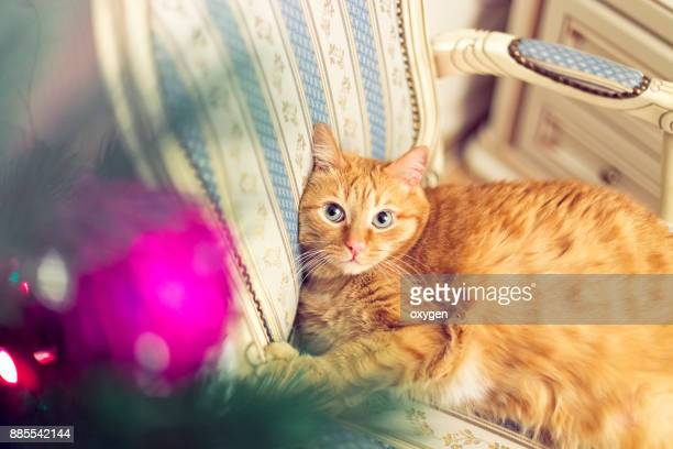 Ginger cat is relaxing near christmas tree