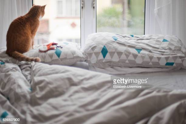 Ginger cat looking out of window