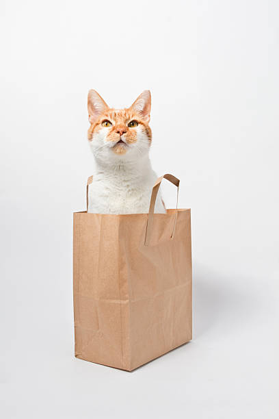 Ginger Cat Sitting In Bag Wall Art