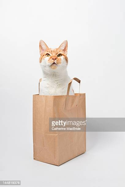 ginger cat sitting in bag - catherine macbride stock pictures, royalty-free photos & images