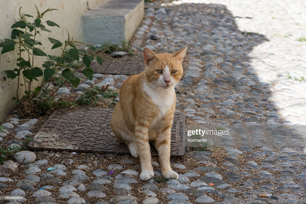 Ginger cat sitting on a street : Stock Photo
