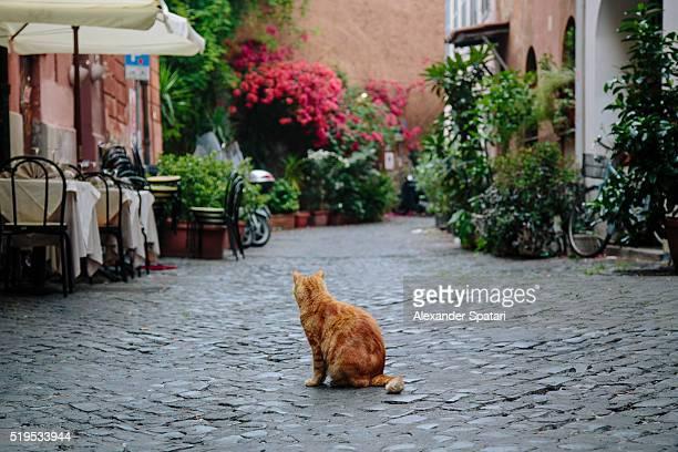Ginger cat sitting on c cobbled street in Trastevere, Rome, Italy