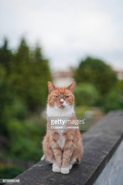 Ginger cat sitting on on cement balustrade