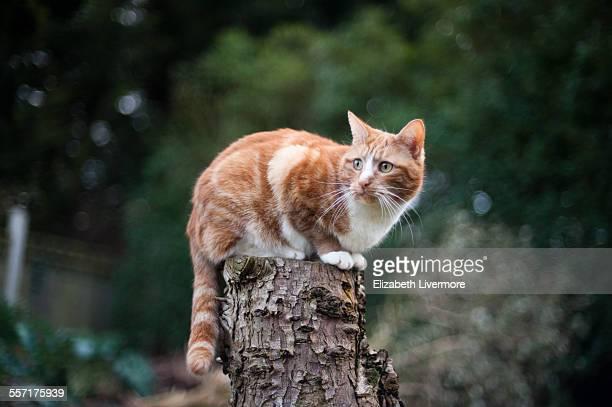 Ginger cat sitting on tree stump