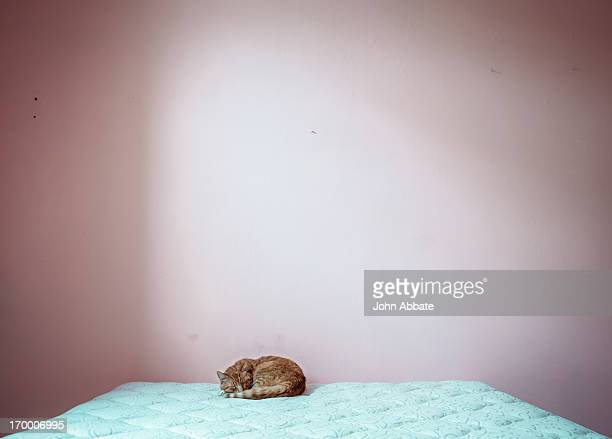 Ginger Cat Sleeping on Big Empty Bed