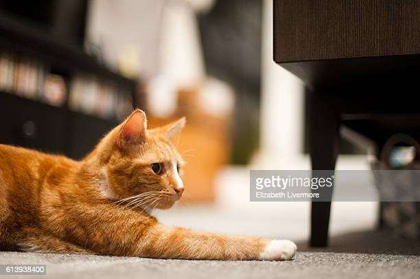 Ginger cat stretched out across floor