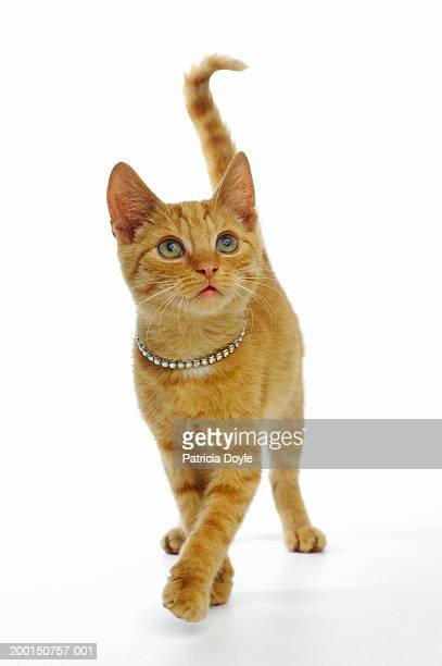 Ginger cat wearing rhinestone collar
