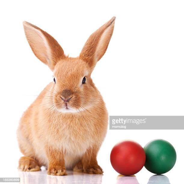 Ginger Easter bunny with two colorful balls on the side