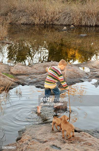 ginger hair boy playing in a creek with puppies - ginger lynn stock-fotos und bilder