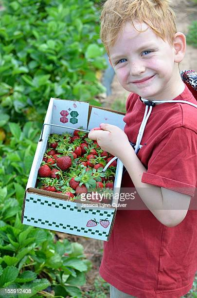 ginger hair boy with box of strawberries - ginger lynn stock-fotos und bilder
