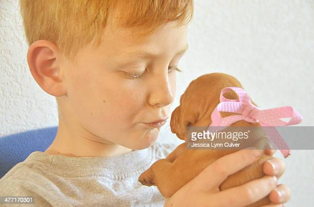 ginger haired boy gives kisses to a vizsla puppy - ginger lynn stock-fotos und bilder